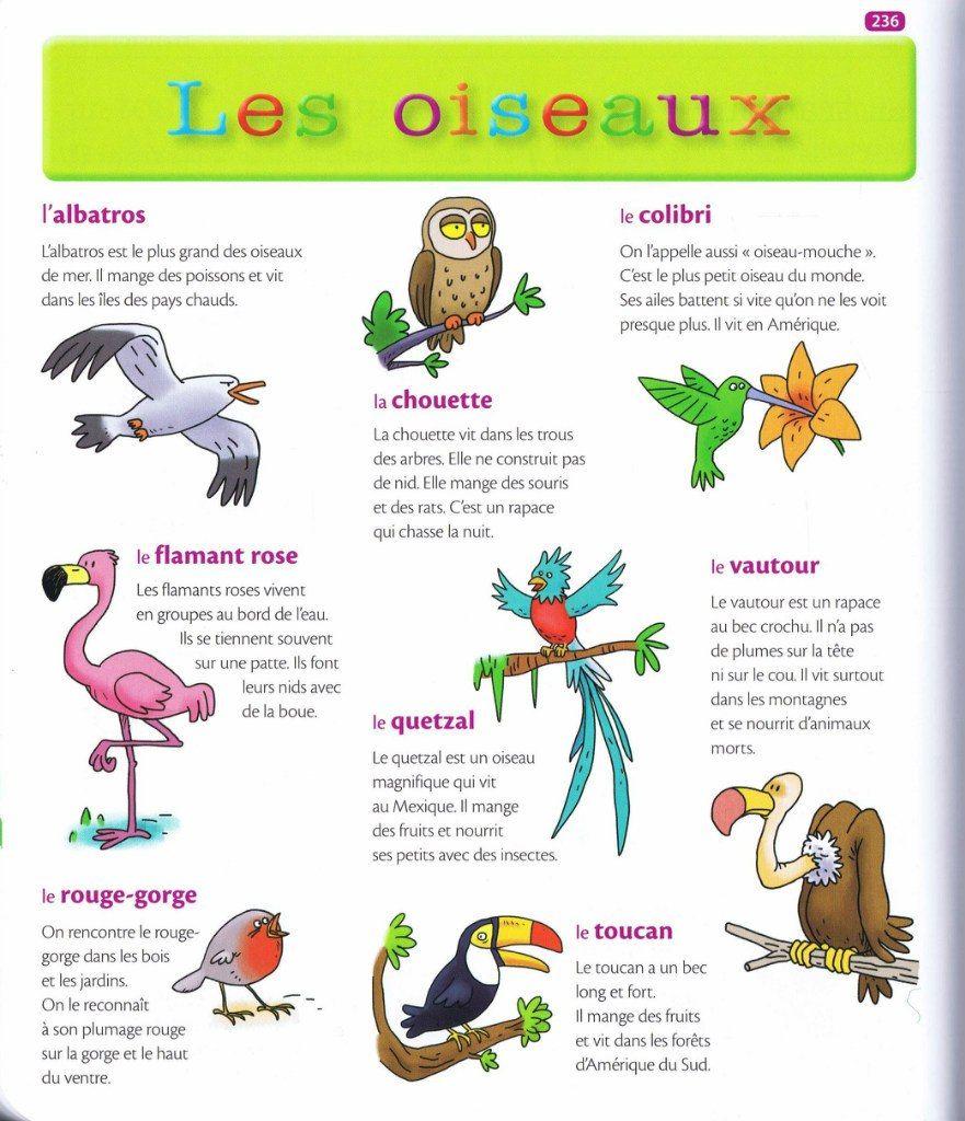 Source mon premier dictionnaire de fran ais larousse - Signification des plumes d oiseaux ...