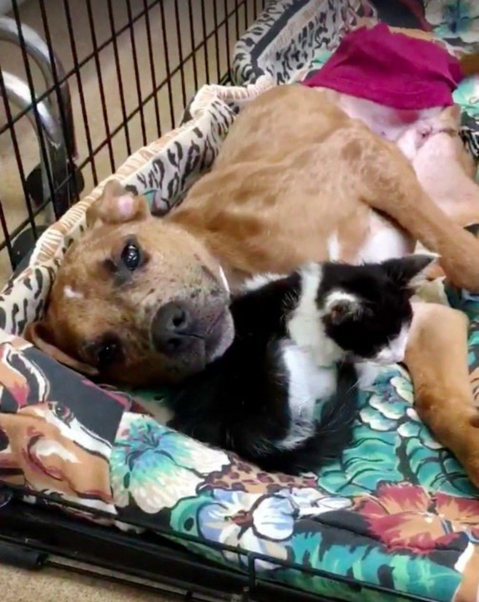 Sick Kitty Finds Comfort in Injured Dog and They Help Each