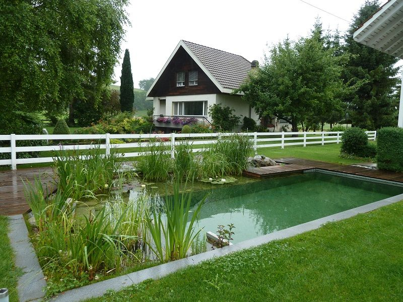 Natural Swimming Pools Pond Landscaping Natural Swimming Pools And Swimming Pools