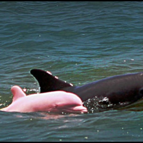 Pink dolphin!