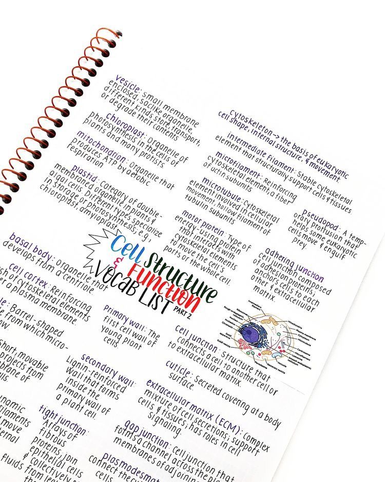 Pin by Ann on handwritting & note taking & study