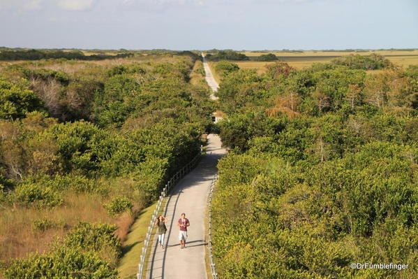 Everglades National Park Shark Valley Where Gumbo Was 37 With
