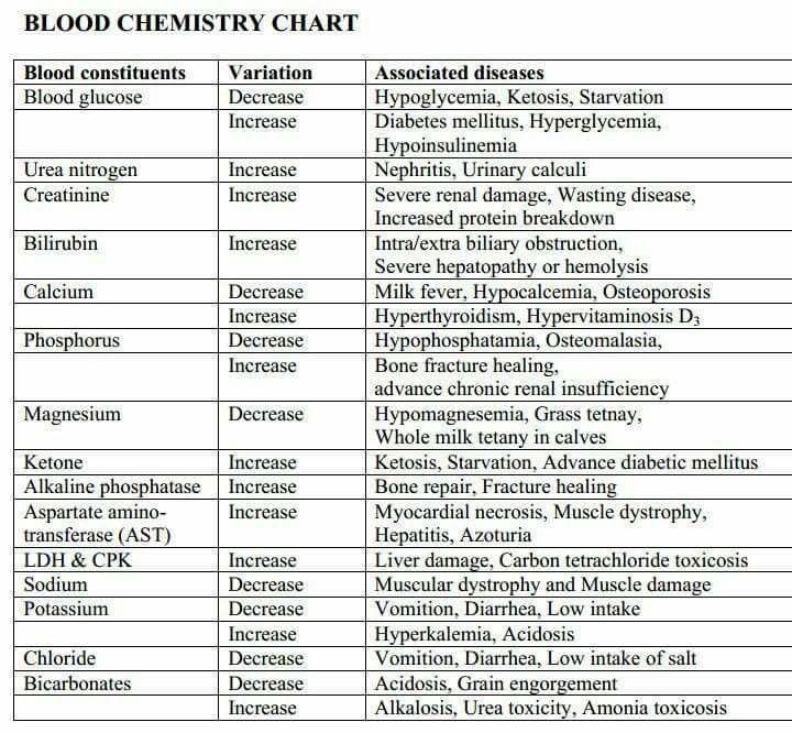 Blood chemistry chart veterinarian school vet tech student office pet also info med rh pinterest