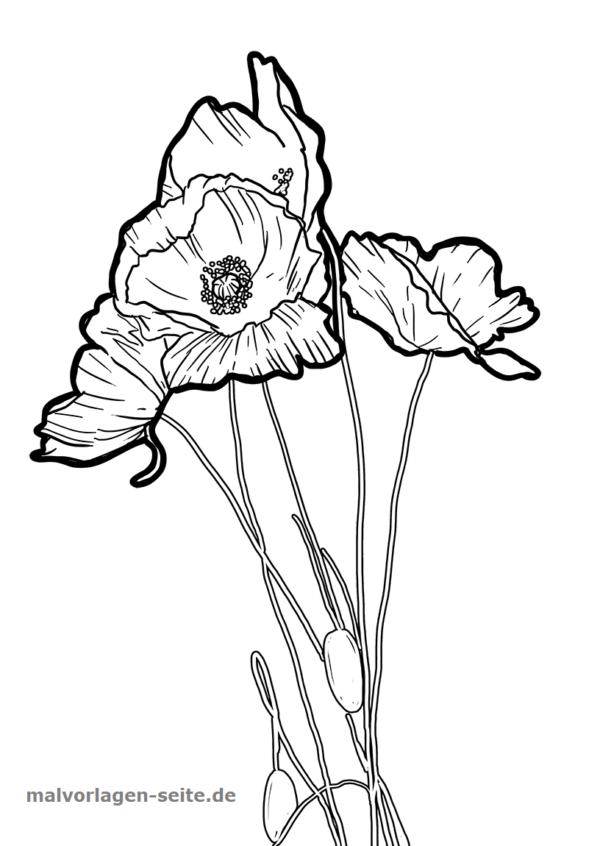 Malvorlage Mohnblume Pflanzen Kostenlose Ausmalbilder Ausmalbilder Malvorlagen Ausmalen