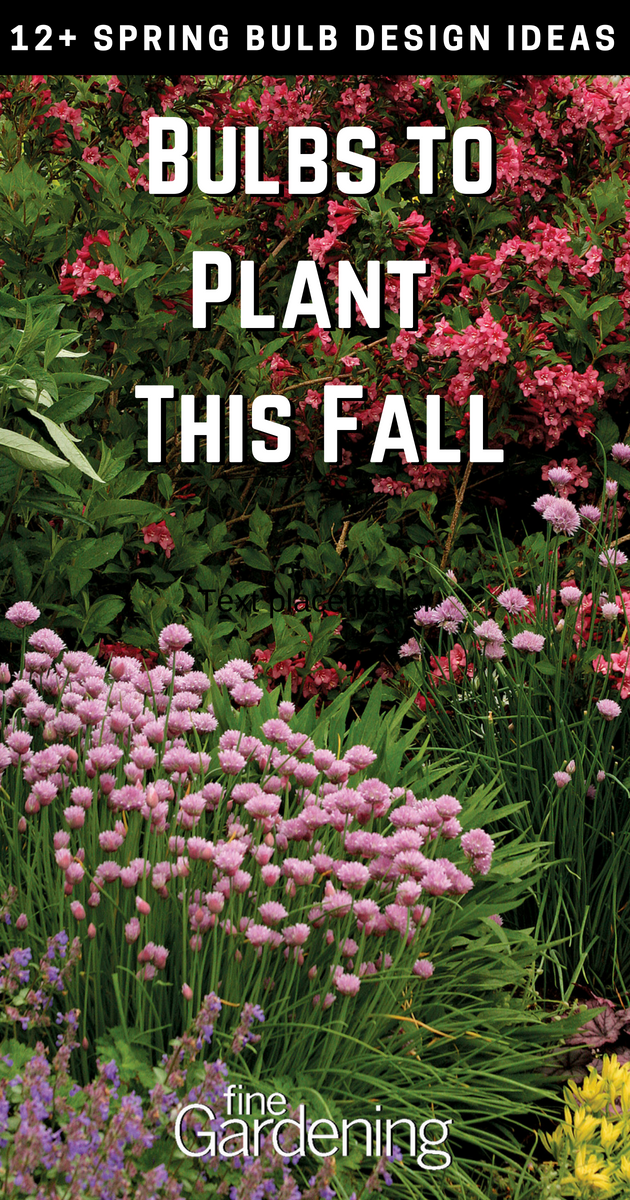 Gardening Inspiration Spring Bulbs To Plant This Fall In Preparation For Next Year Dont Forget Youll Th Fall Flowers Garden Spring Bulbs Bulbs Garden Design