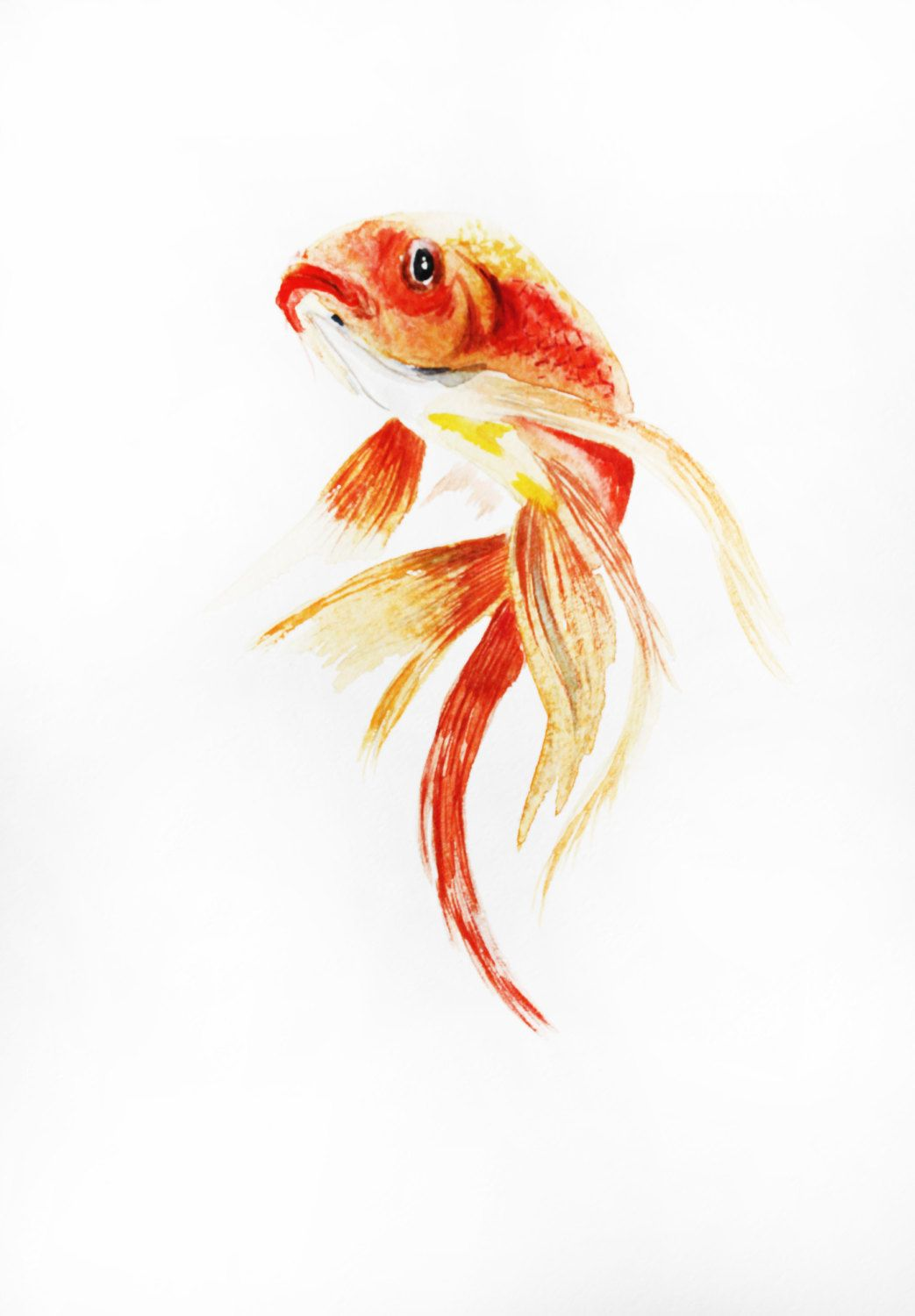 Original watercolor painting fish watercolor gold fish for Carpe koi aquarium 300 litres