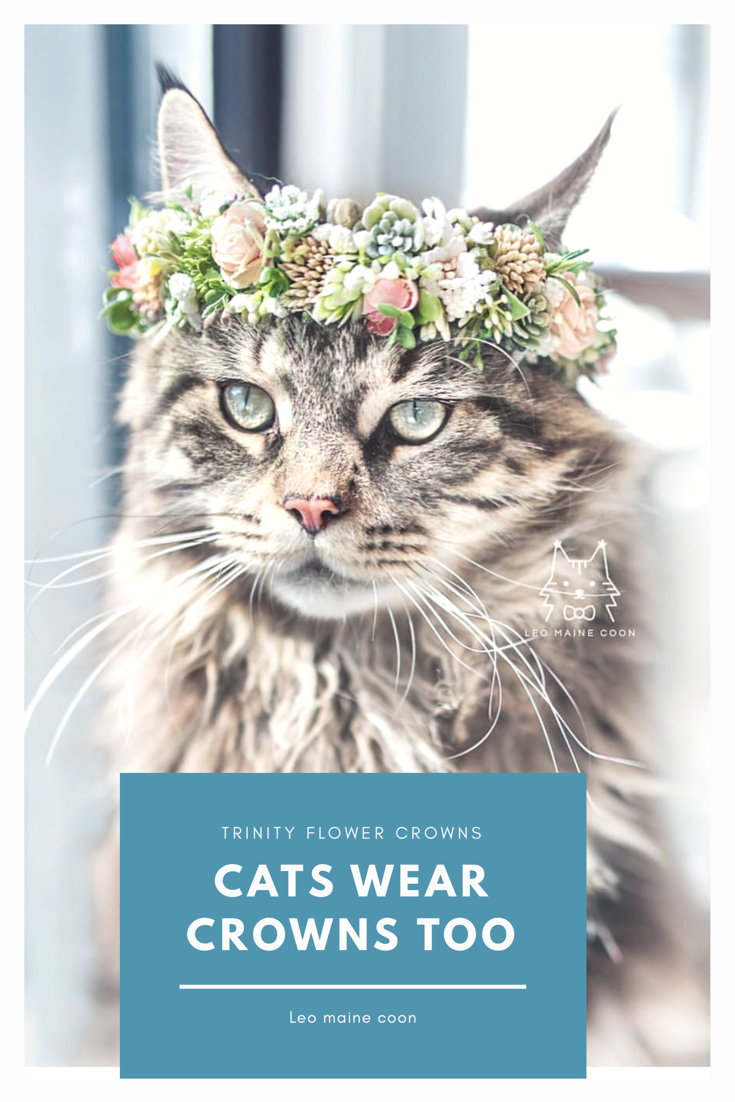 Flower Crown Flower Crown For A Photoshoot Cute Cats Cats Cat