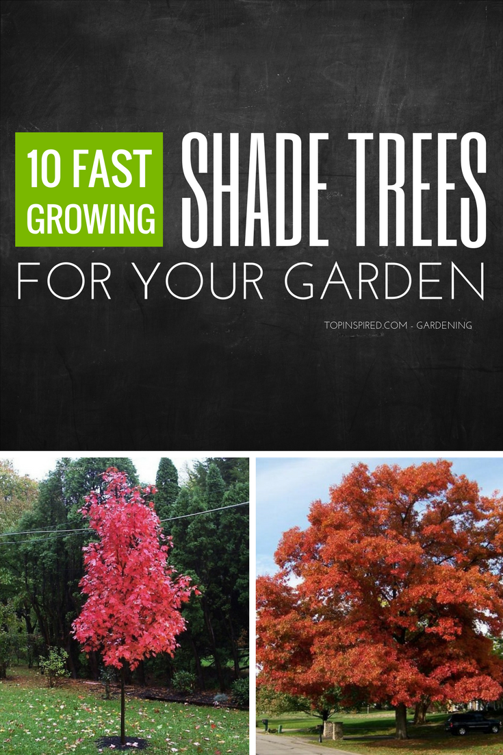 Top 10 Fastest Growing Shade Trees Fast Growing Shade Trees