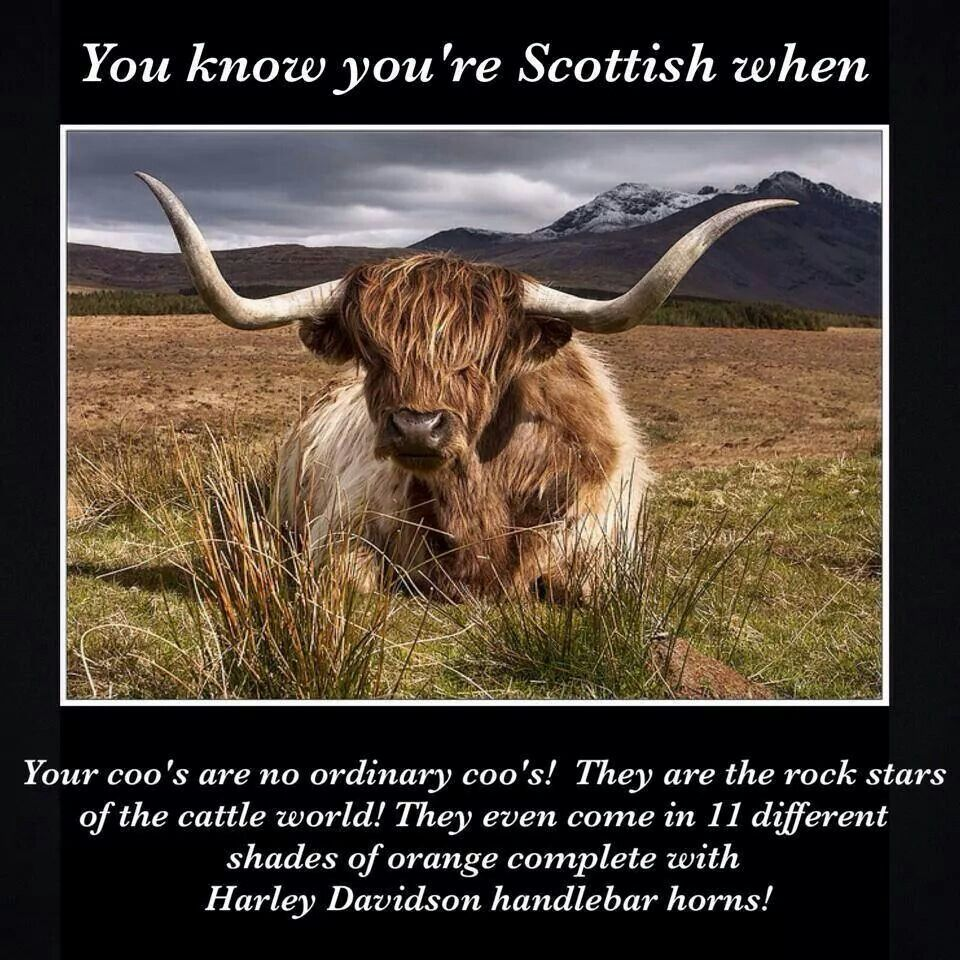 Funny Jokes Quotes: Kilts, Irish Humor And Rugby