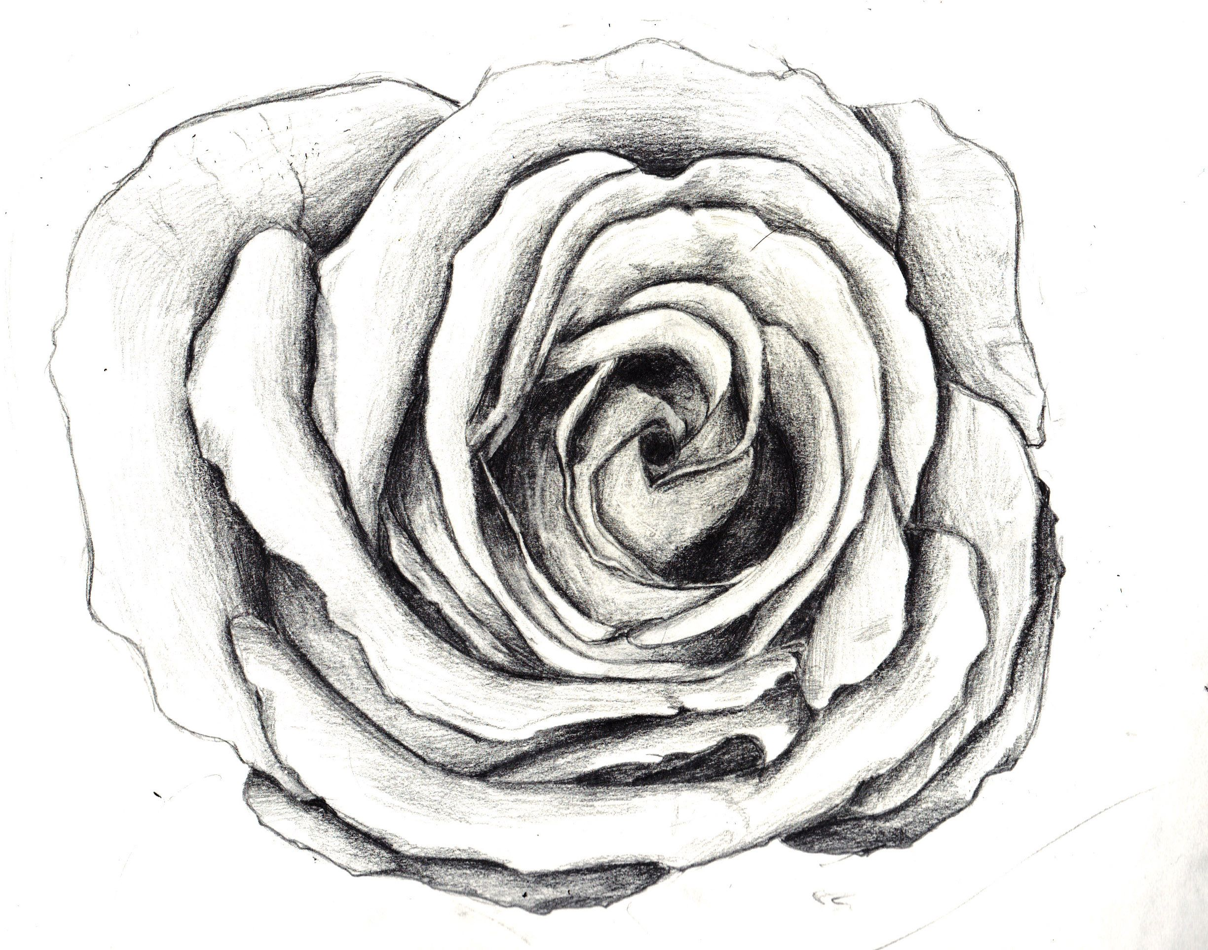 Flowers For > Flower Sketches | Coloring pages | Pinterest