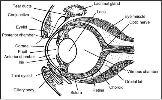 parts of a horse eye