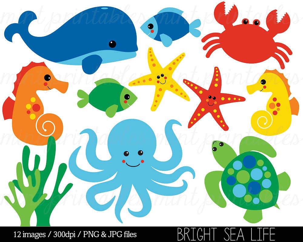 Sea Animal Clipart Under the Sea Baby Sea Creatures Clip Art