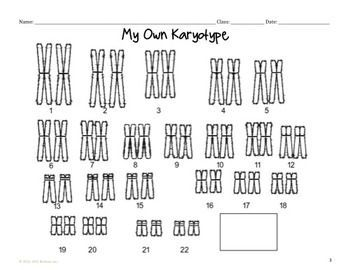 Color Your Own Karyotype: Independent Assortment Lesson ...