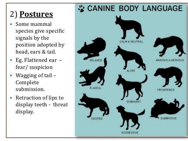 Animal Communication Dog Body Language Animal Communication Dog Tail Meaning