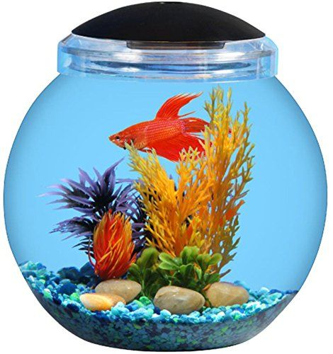 Spherical 1 1 2 Gallon Betta Kit Ideal For Home Dorm Room Or Office Energy Efficient Led Lighting With 7 Colors Betta Fish Bowl Fish Tank Lights Fish Bowl