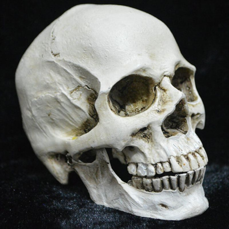 high quality small plastic resin halloween party skull decorations holiday props realistic skull model toys haunted - Halloween Skull Decorations