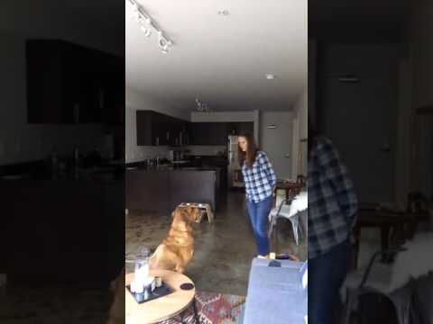 "Tully's Dog Training Live - Replay of Mary Tully - How to Teach Your Dog To ""Stay"" in 4 Simple Steps http://www.youtube.com/watch?v=F7Bjew7qSYw"