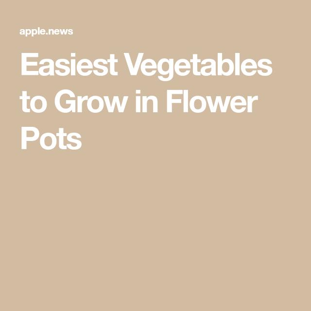Easiest Vegetables To Grow In Flower Pots — Hgtv Easy 400 x 300