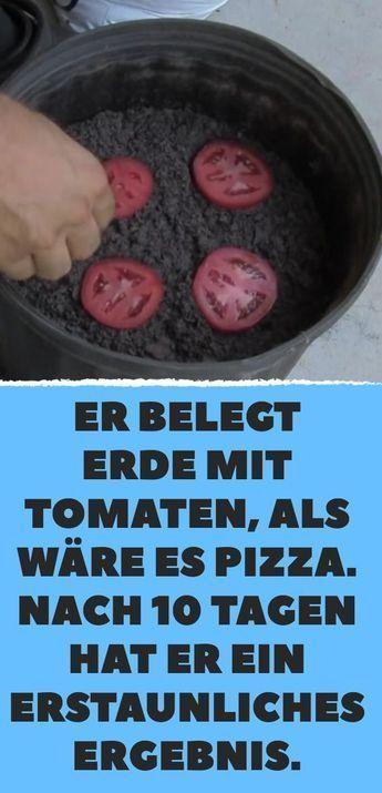 Er belegt Erde mit Tomaten als wäre es Pizza Nach 10 Tagen hat er ein erstaun