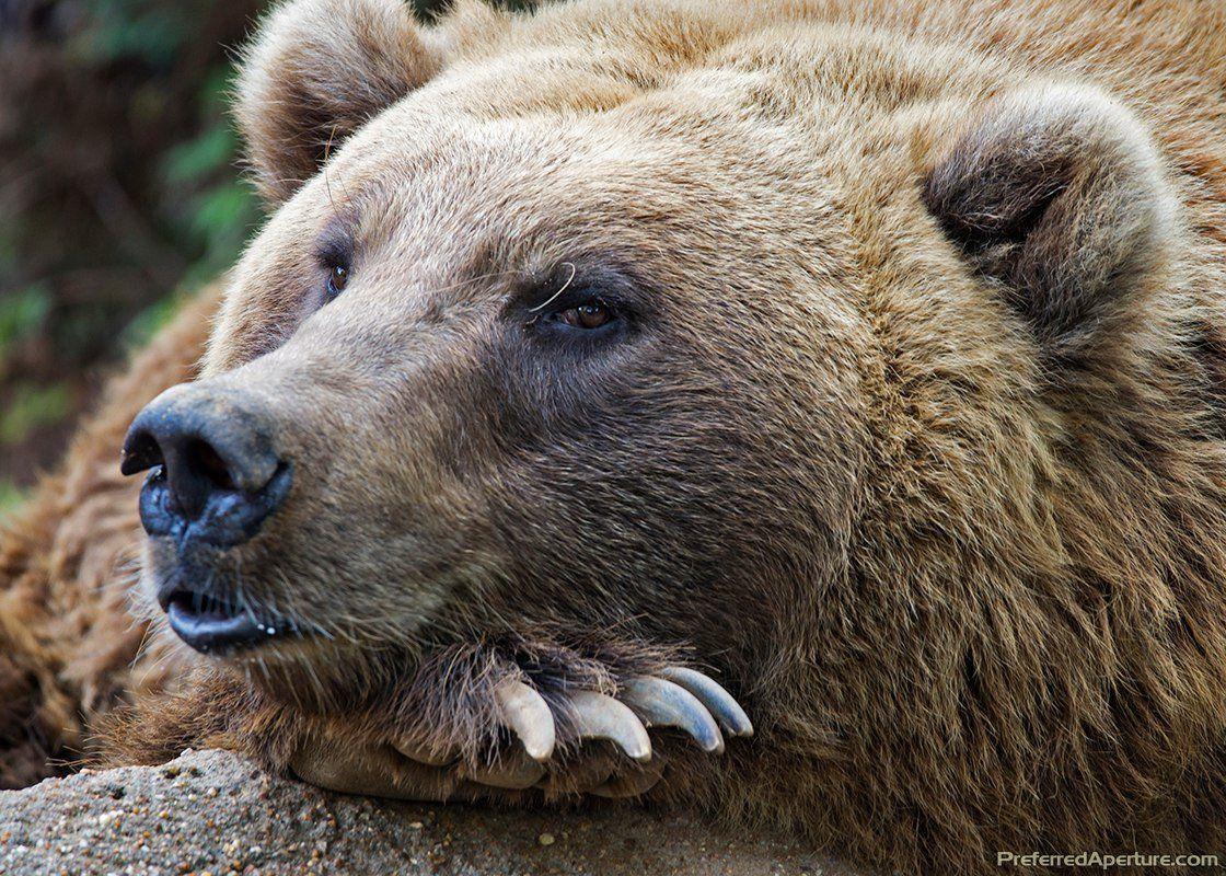 животное символ россии картинки некоторые