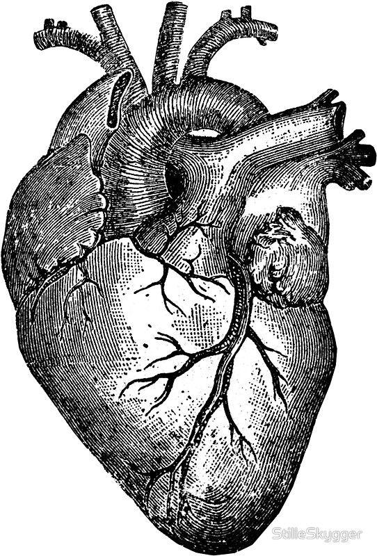 Vintage Heart Anatomy