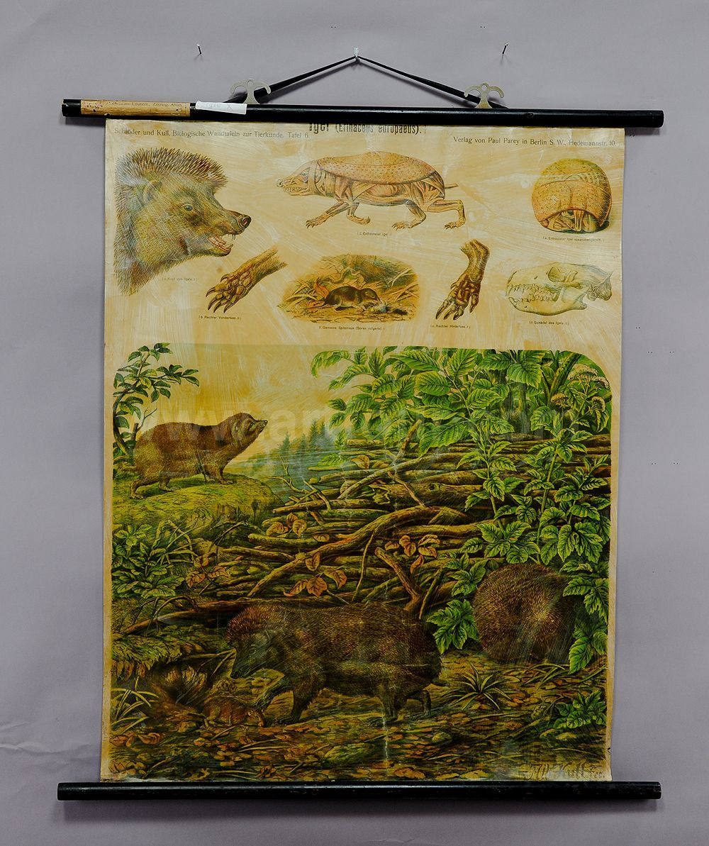 antique wall chart print scenery with a moose family Tundra waterhole landscape