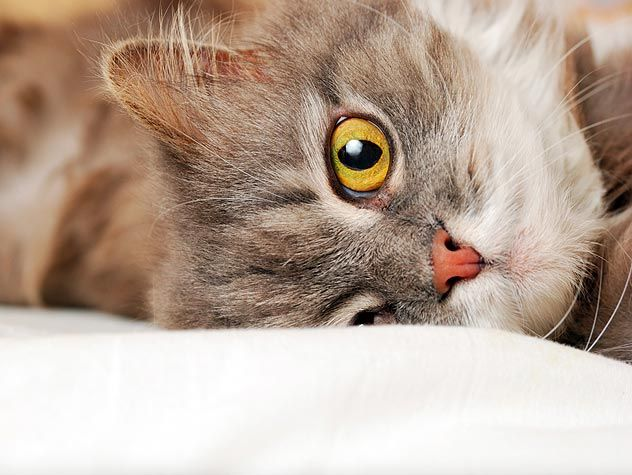 Tips for the First 30 Days of Cat Adoption Cats, Crazy