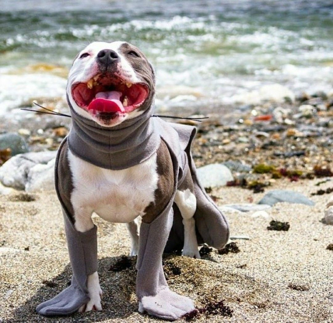 A Pitty In Seal Costume