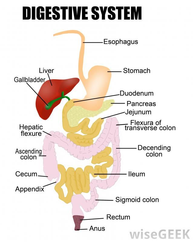 Mechanical digestion is the process of breaking food down into ...