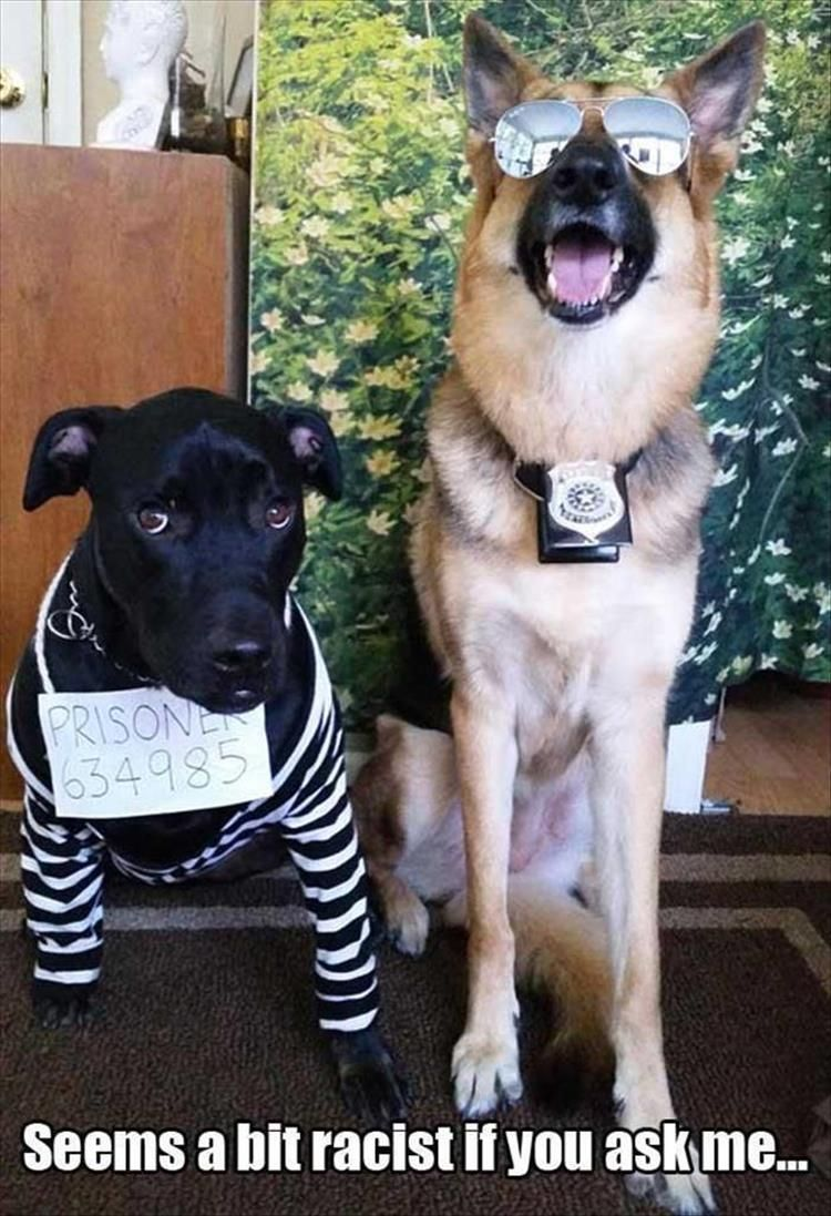 Funny Animal Pictures Of The Day 24 Pics Dog Halloween Pet