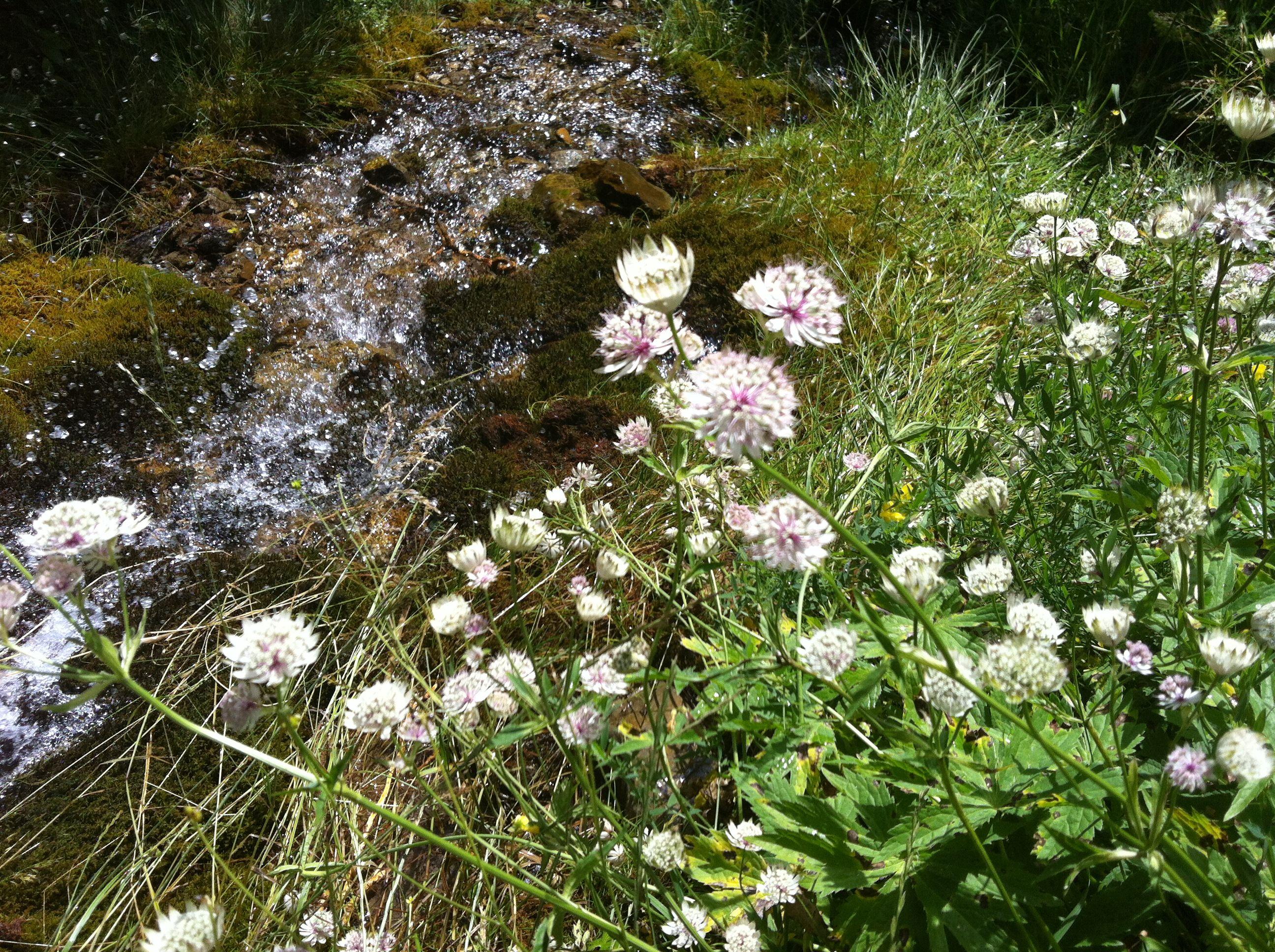 Fleurs des Ecrin