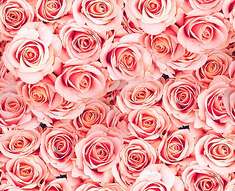 Resizeandsave Online Openphoto Php Img X3d Http Pink Flowers