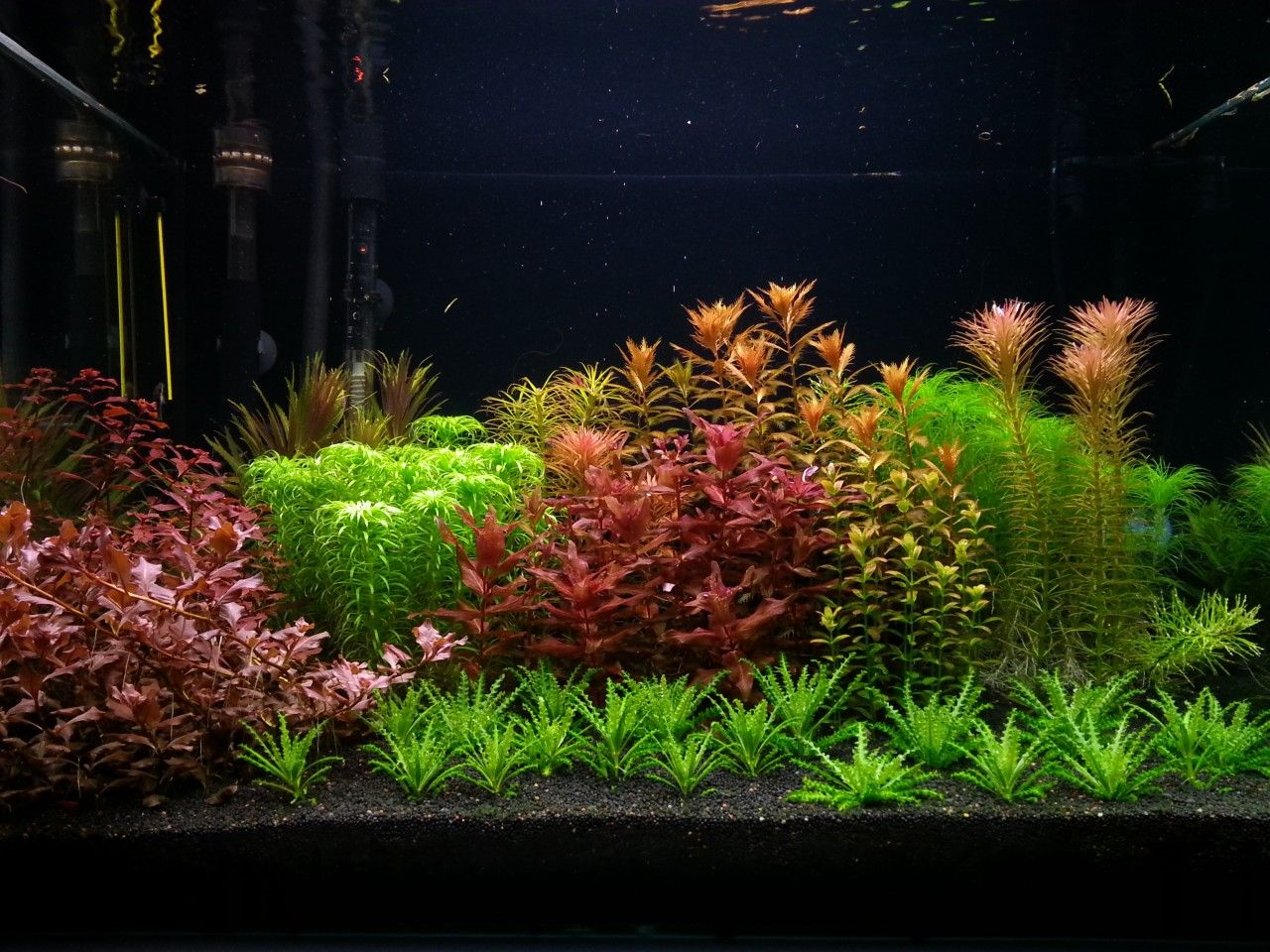Planted tank red and green by adrian nicolae aquascape for Plante aquarium