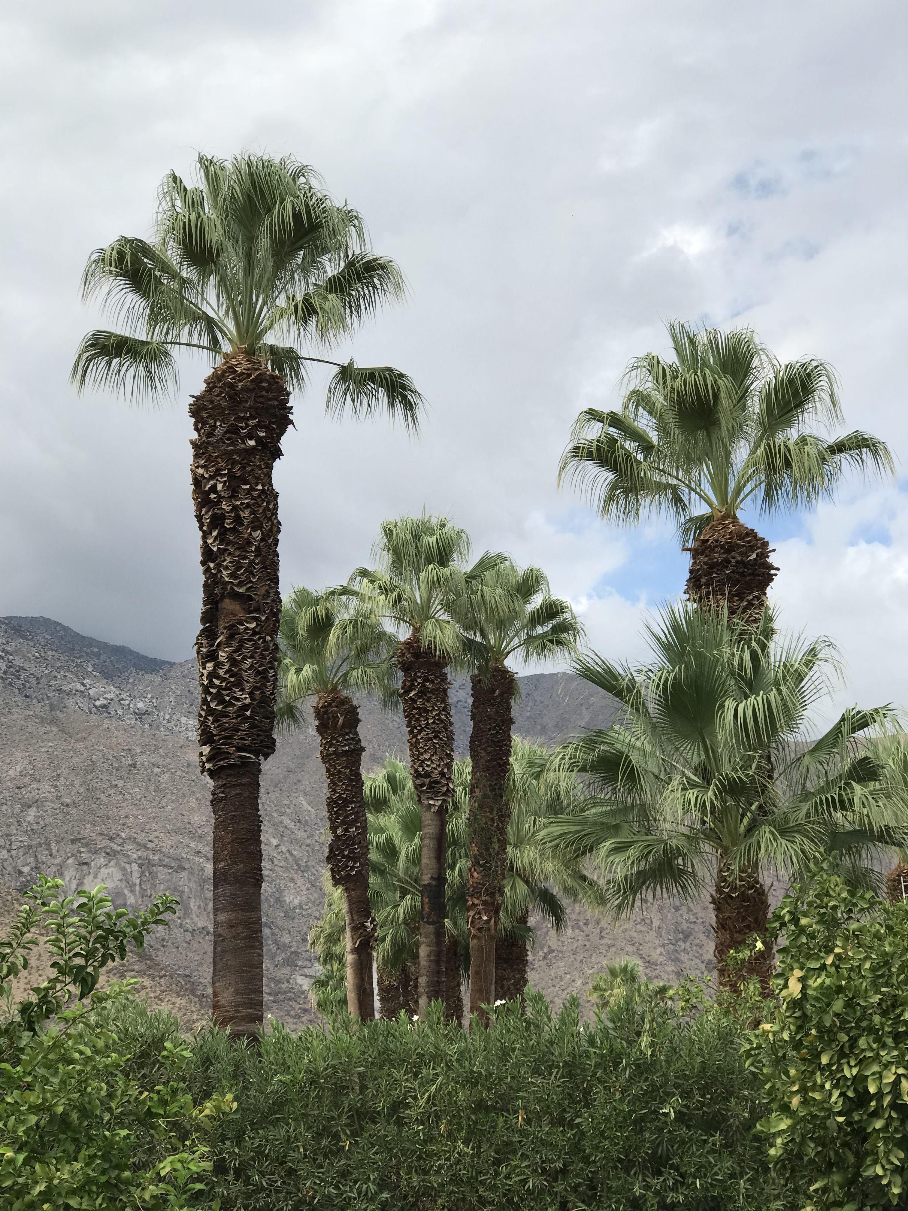 Cactus Palm Trees Stock Photo 76115560 - Shutterstock   Name Cactus Palm Tree