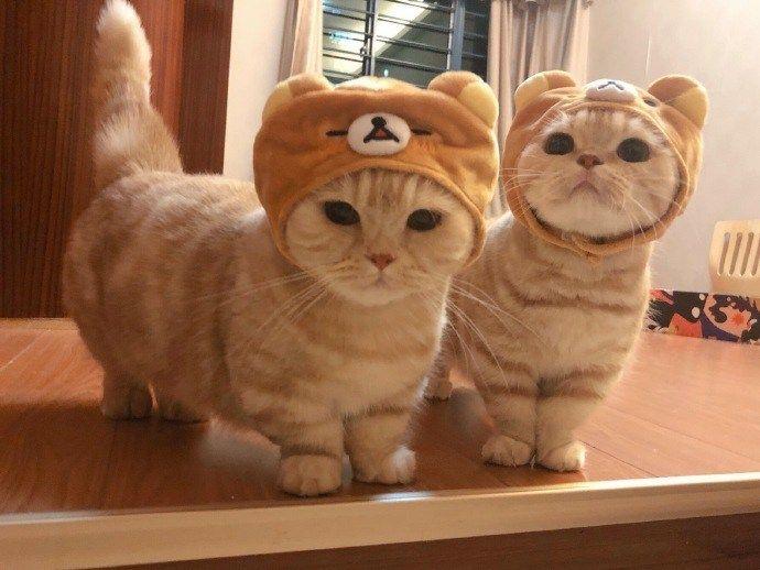 Photo of Los gatos Rilakkuma son tan lindos |