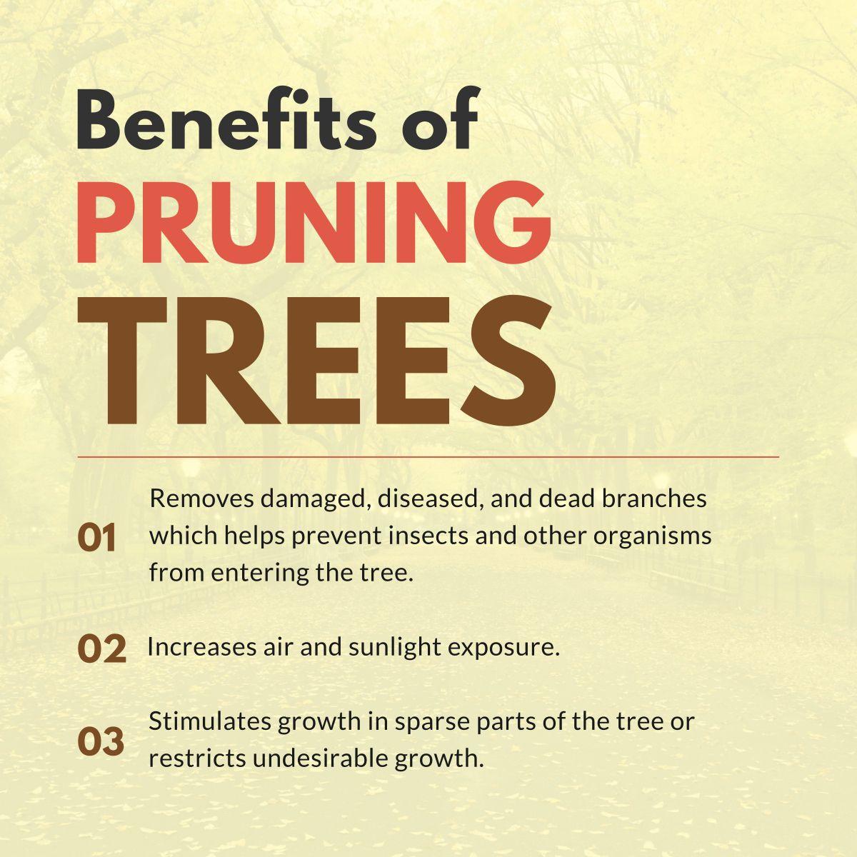 Benefits of pruning trees benefits pruningtress