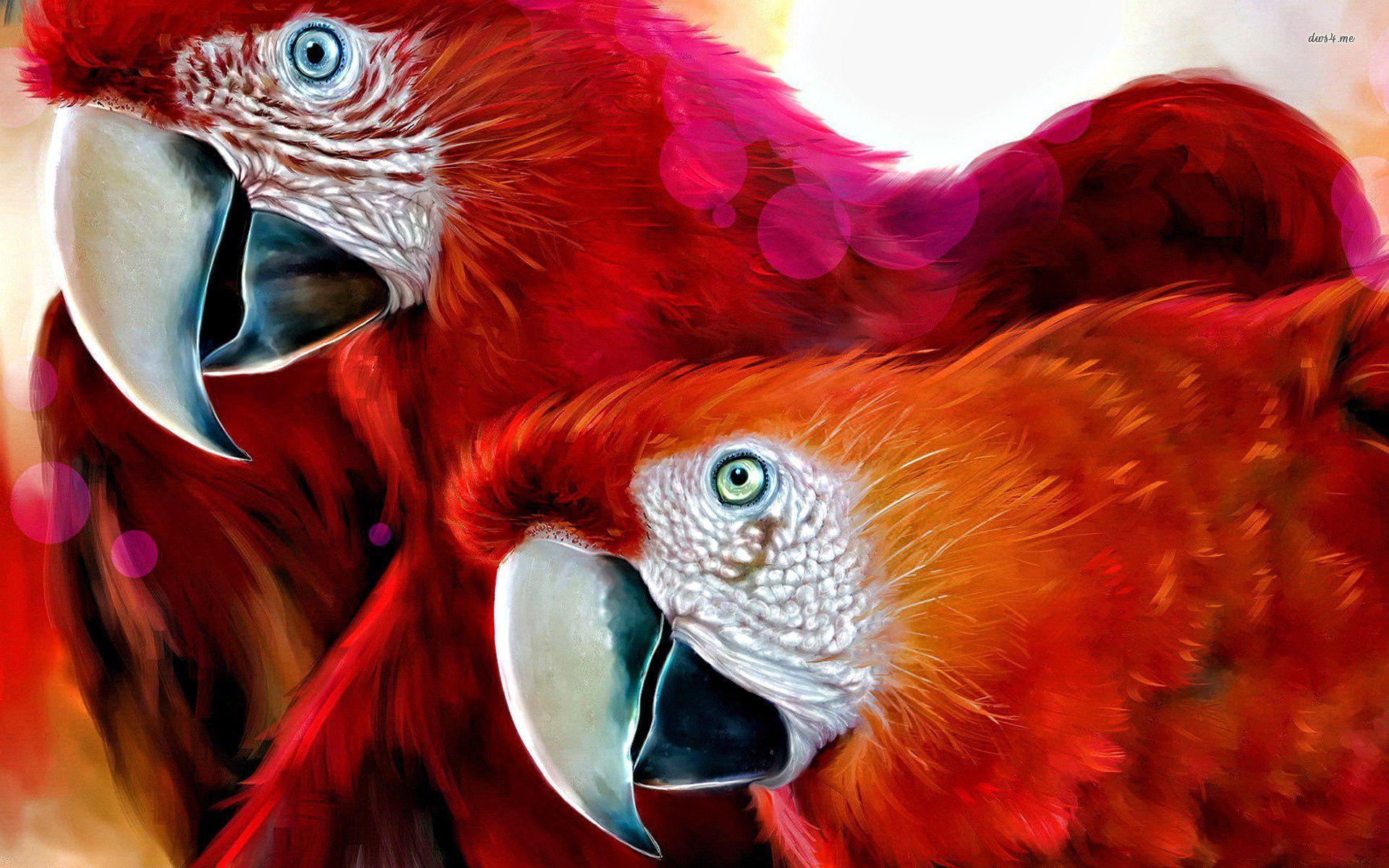 Scarlet Macaw Portrait Amazon Hd Wallpaper Free Download Scarlet Macaw Blue Macaw Parrot