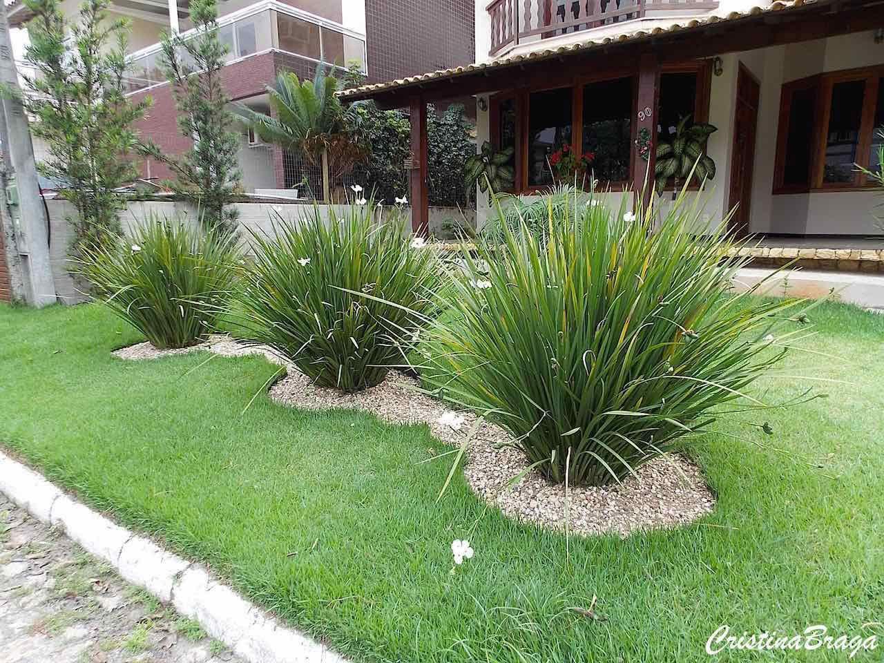 Moréia dietes bicolor gardens garden ideas and sidewalk ideas