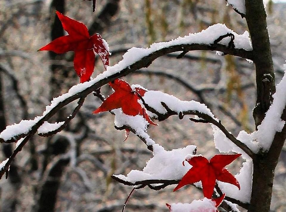 Snow covered fall | Christmas wreaths, Holiday decor, Holiday