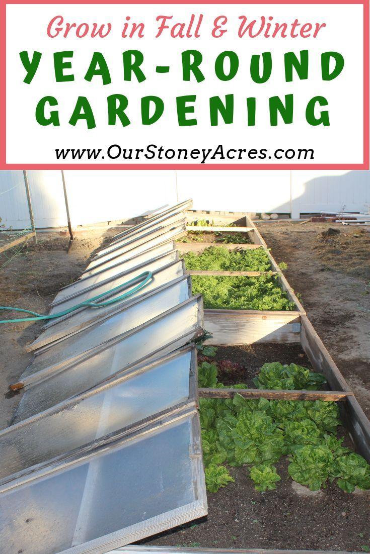 Year-Round Gardening #ediblegarden