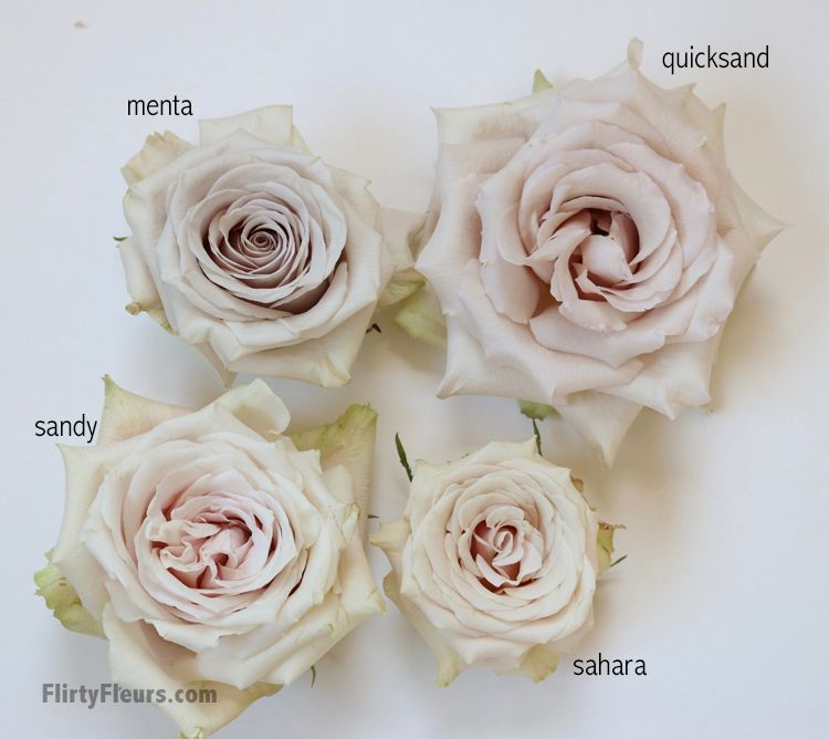 Flirty Fleurs Beige Rose Study Sandy Menta Quicksand And Sahara With Roses From Mayesh Wholesale Rose Varieties Pink Wedding Flowers Rose