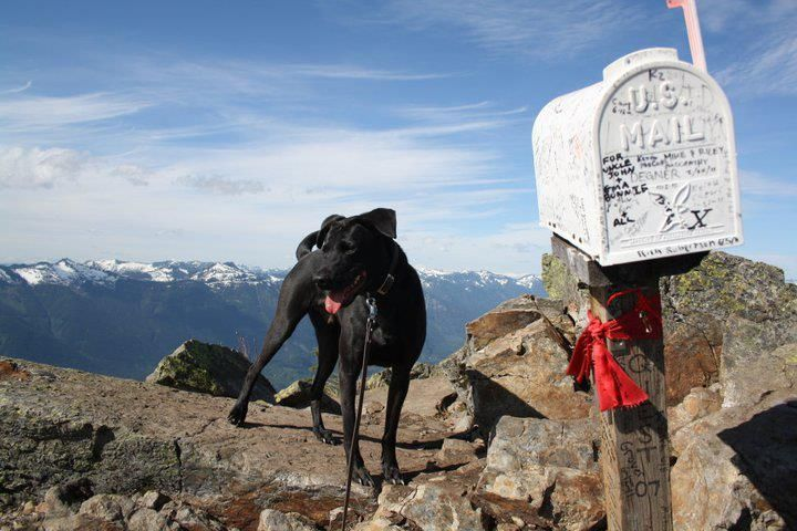 This is Bear on top of Mailbox Peak, on the Mailbox Peak