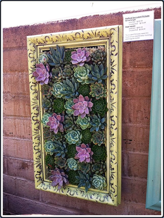 artdecosucculents few ideas of plants that work exceptionally