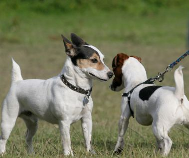 Letting dogs meet: the 3 second rule