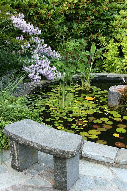 Pond With Lily Pads Haver Havearbejde Inspiration