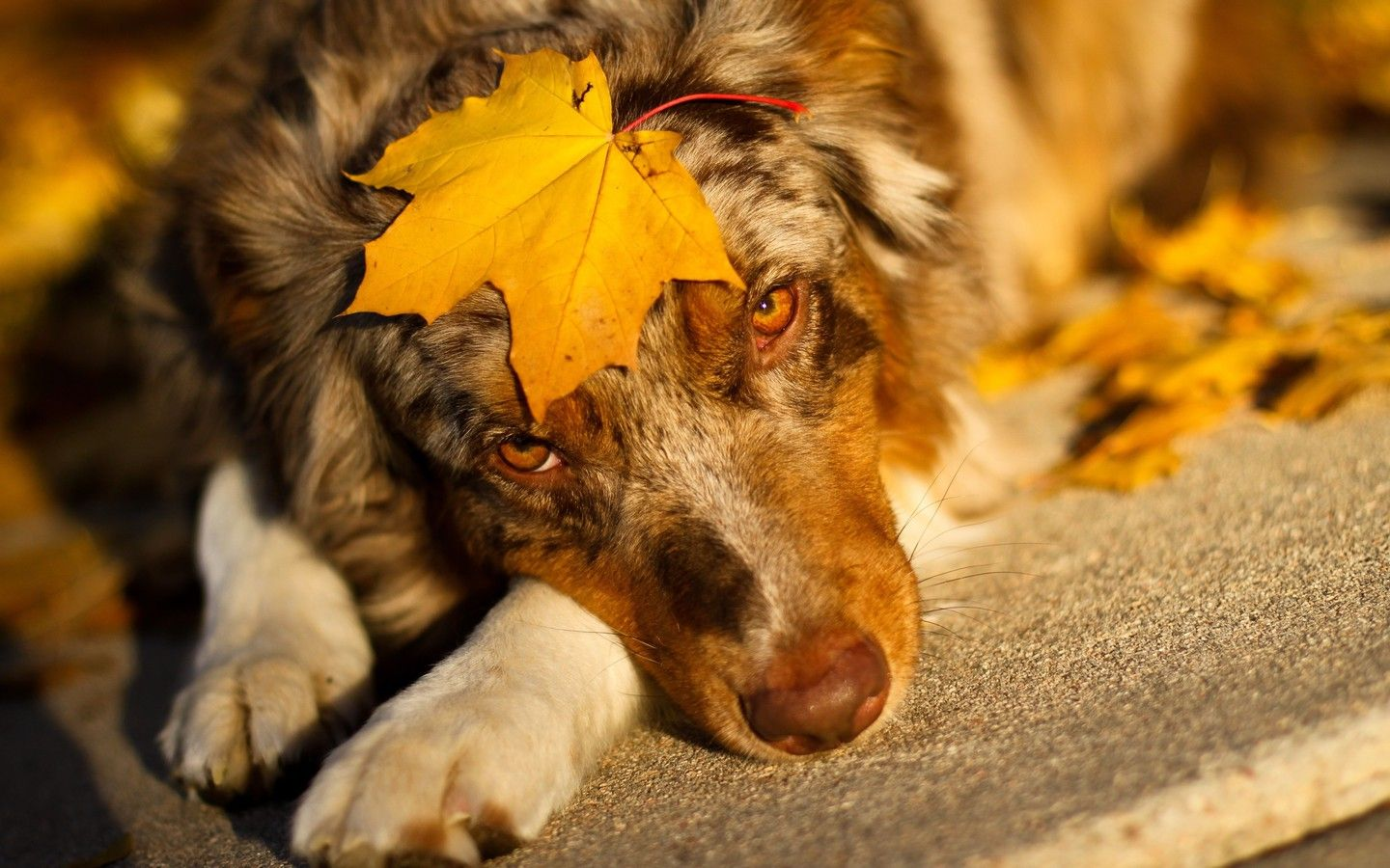 Dog wallpapers 1080p firefox wallpaper free download