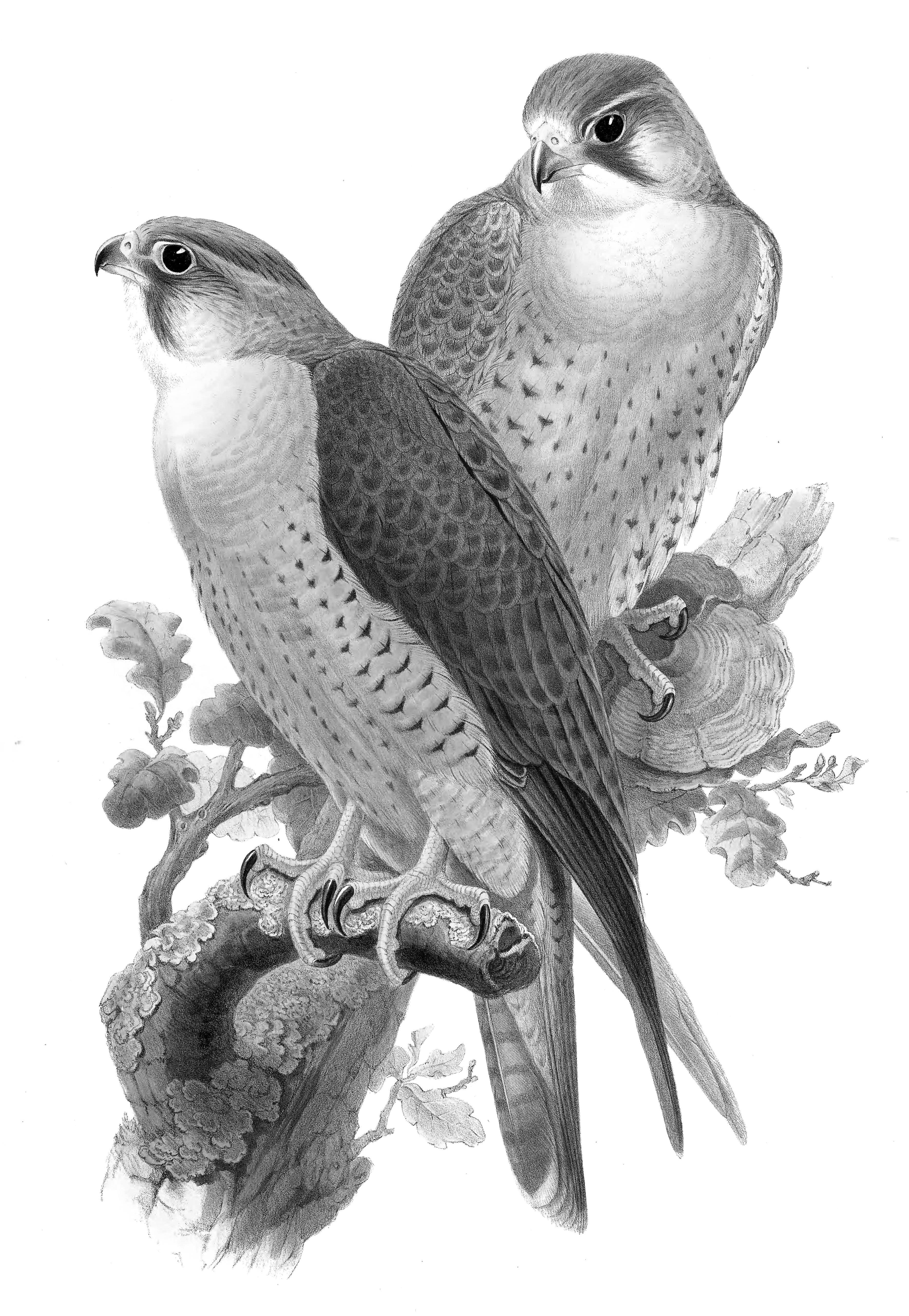 aves de asia