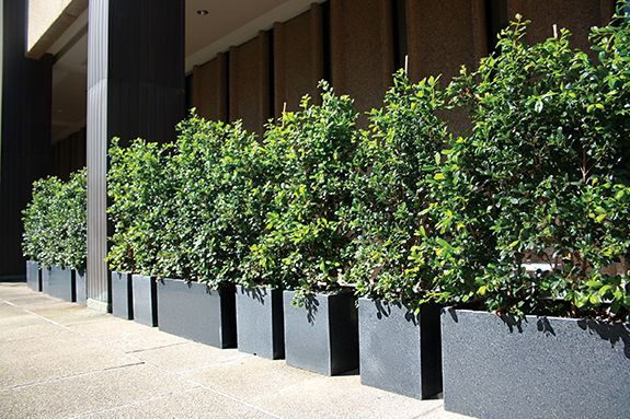 Outdoor Granite Planters For Lunch Areas In Brisbane Planter Box