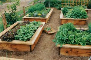 Herb Gardening Tractor Supply Co Vegetable Garden Raised Beds