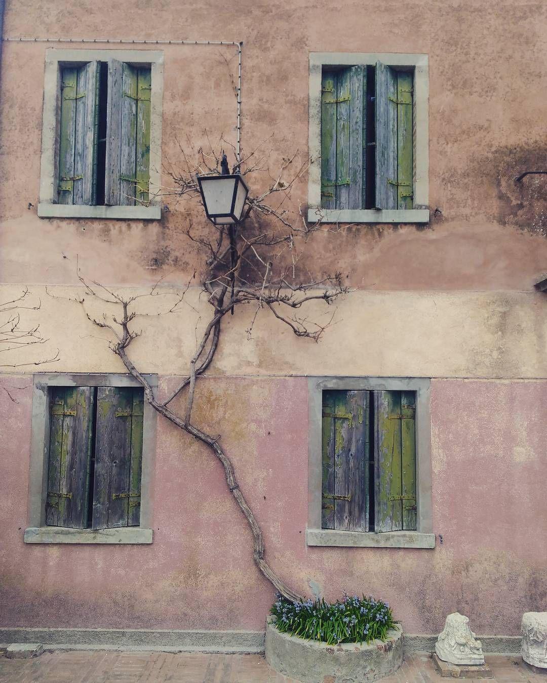 #torcello #veneto #italy #visitveneto #facciata #casa #rampicante #igersveneto #ig_veneto #igersvenezia #venice #isola #bellaitalia #beautifulitaly by alicolorate